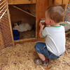 Petting zoo<br /> <br /> Állatsimogató