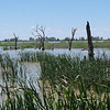 Reedy Lakes