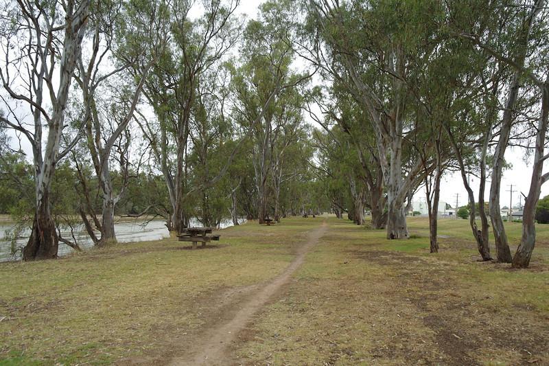 Riverside walk at Swan Hill<br /> <br /> Folyóparti séta Swan Hillben