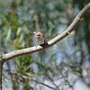 A bird<br /> <br /> Egy madár