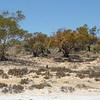 Can you spot the kangaroo?<br /> <br /> Látod a kengurut?