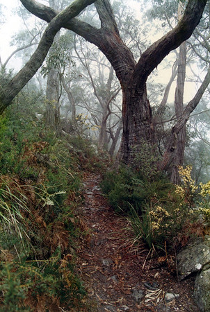 The Grampians - September 1990