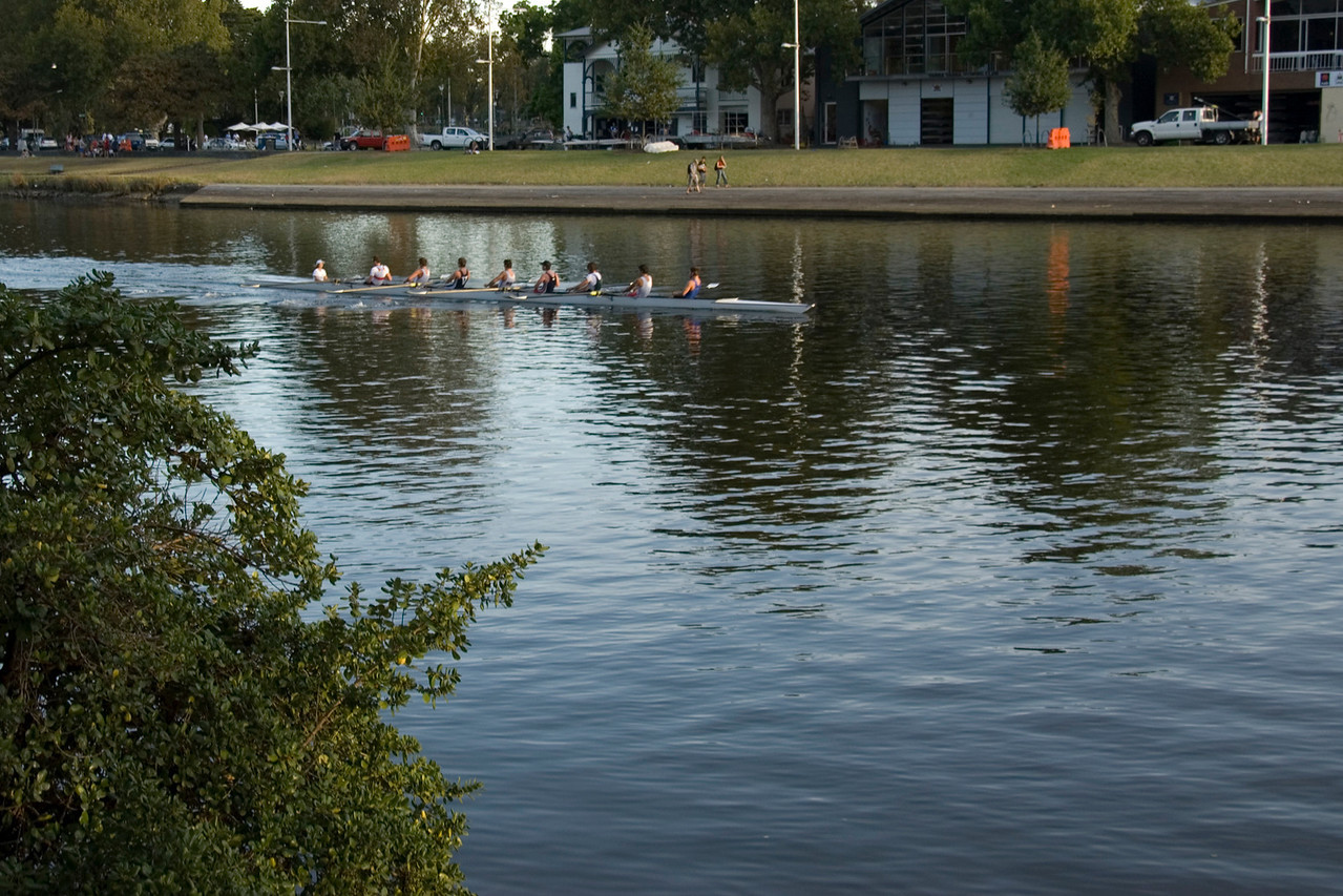 Rowers on Yarra River 1 - Melbourne, Victoria, Australia