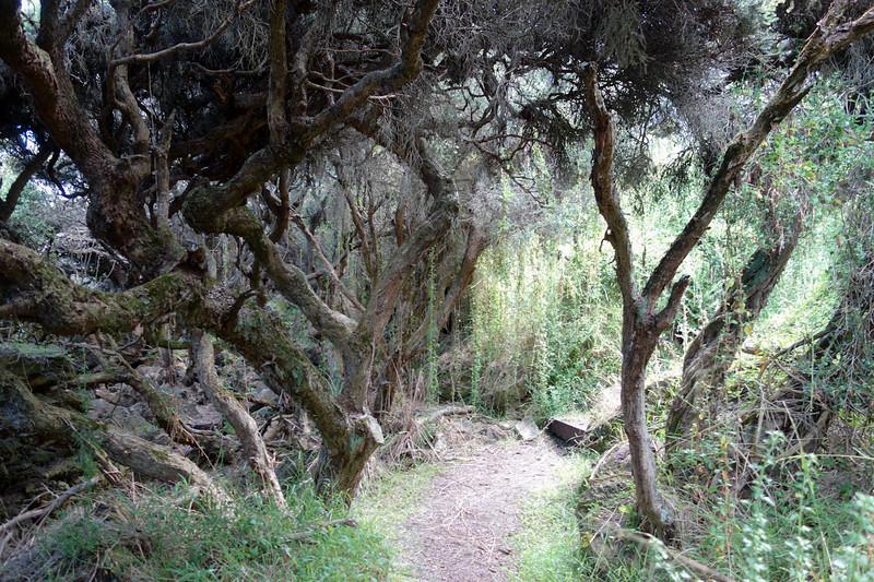 Enchanted forest - Portland<br /> <br /> Elvarázsolt erdő - Portland