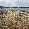 Griffiths island - Port Fairy<br /> <br /> Griffiths sziget - Port Fairy