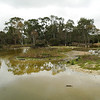 Serendip Sanctuary - on the way to Warrnambool<br /> <br /> Serendip park - úton Warrnambool felé