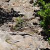 Venomous snake at Cape Nelson<br /> <br /> Mérgeskígyó Nelson foknál