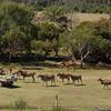 The giraffe didn't bother, but the others ...<br /> <br /> A cél zsiráf nem törődött a felajánlott élelemmel, annál inkább a többiek...