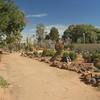 Cacti are evreywhere<br /> <br /> Kaktuszok mindenfelé