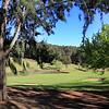 Araluen_18SideTrees_5005