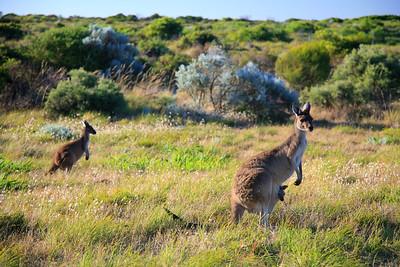 The Links Kennedy Bay, Western Australia, Australia