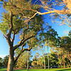 Lake Karrinyup_TreesVert_5792