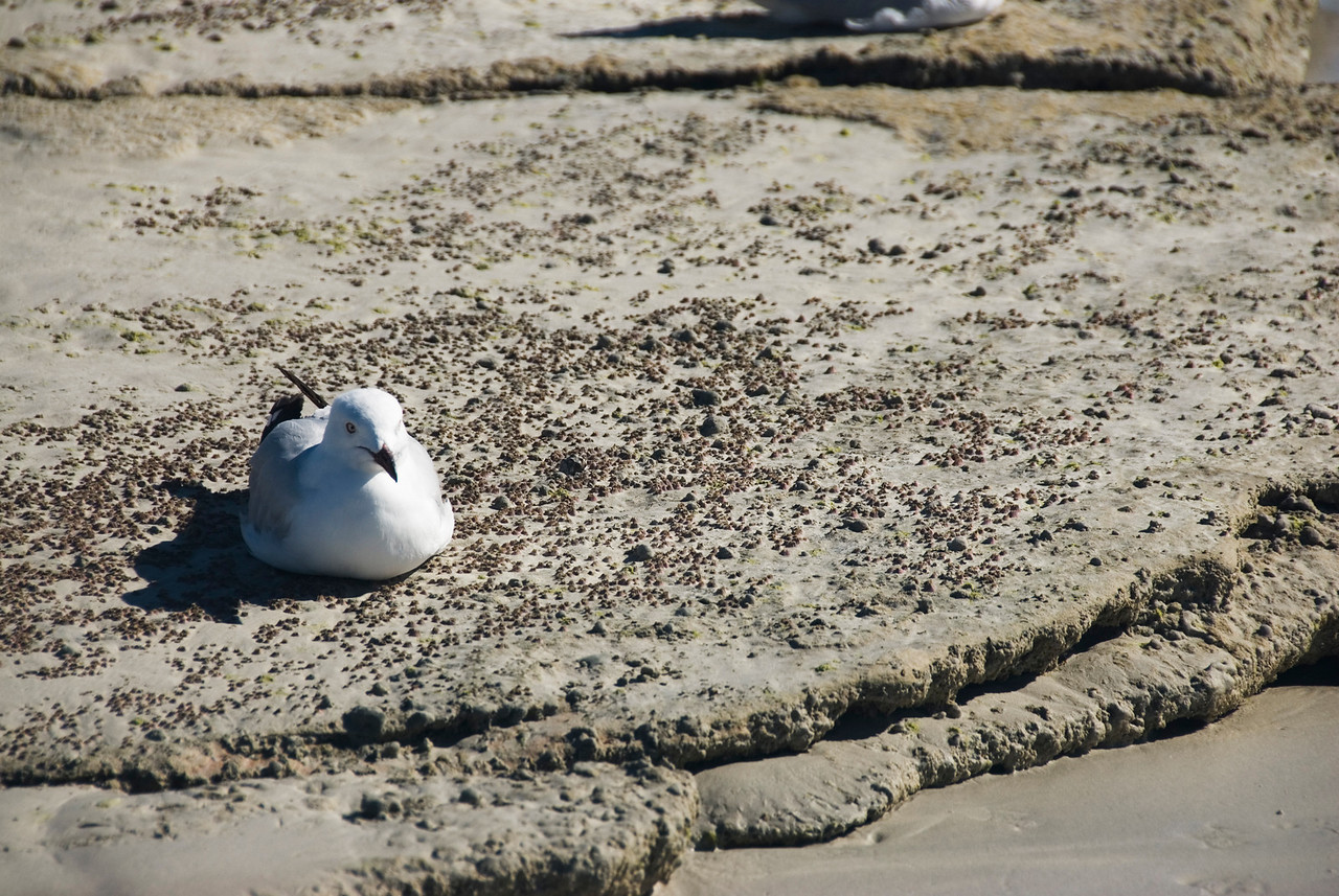 Birds on Beach 5, Cable Beach - Broome, Western Australia