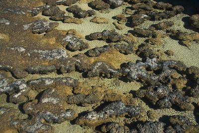 Stromatolite 22, Hamelin Pool - Shark Bay, Western Australia