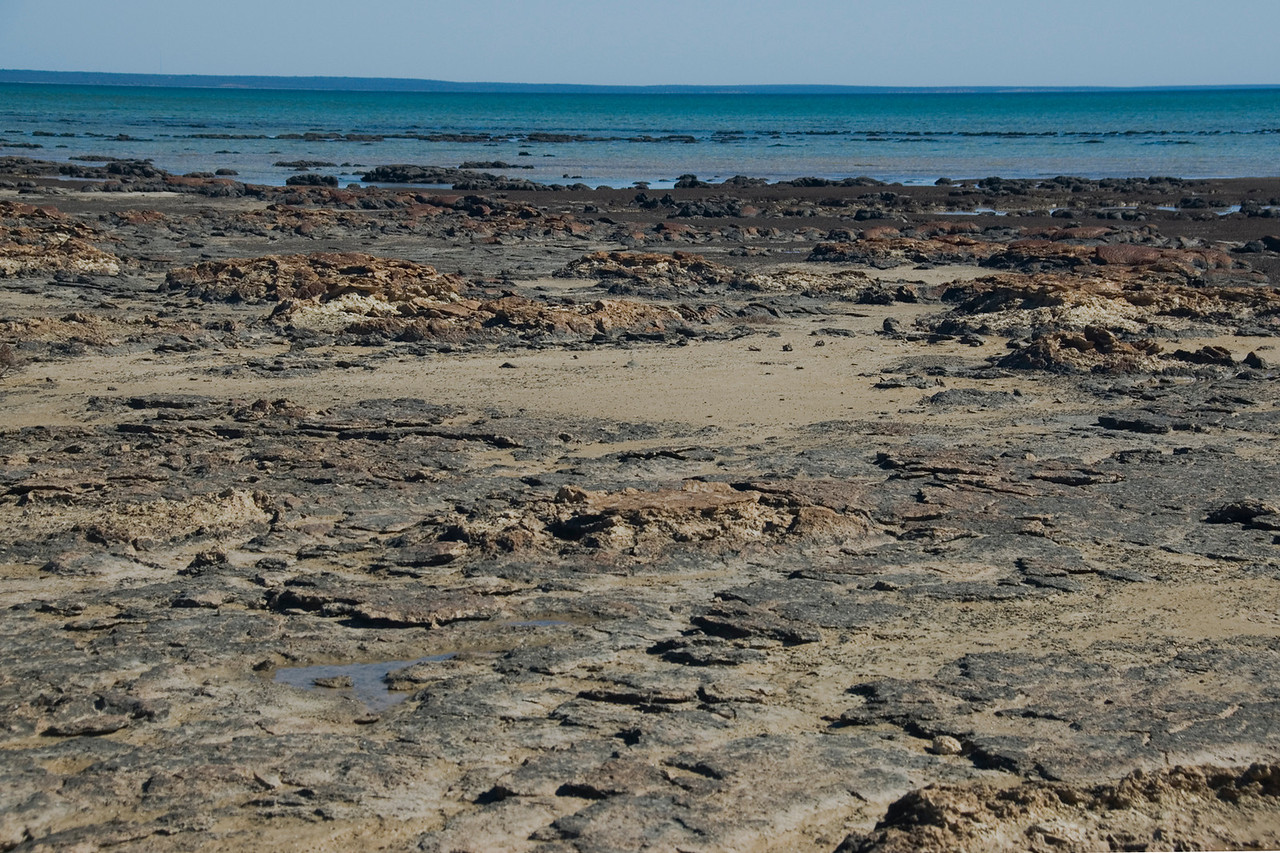 Stromatolite 11, Hamelin Pool - Shark Bay, Western Australia