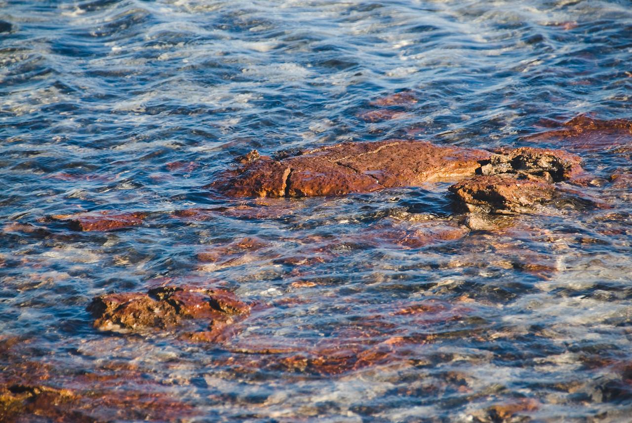 Stromatolite 7, Hamelin Pool - Shark Bay, Western Australia