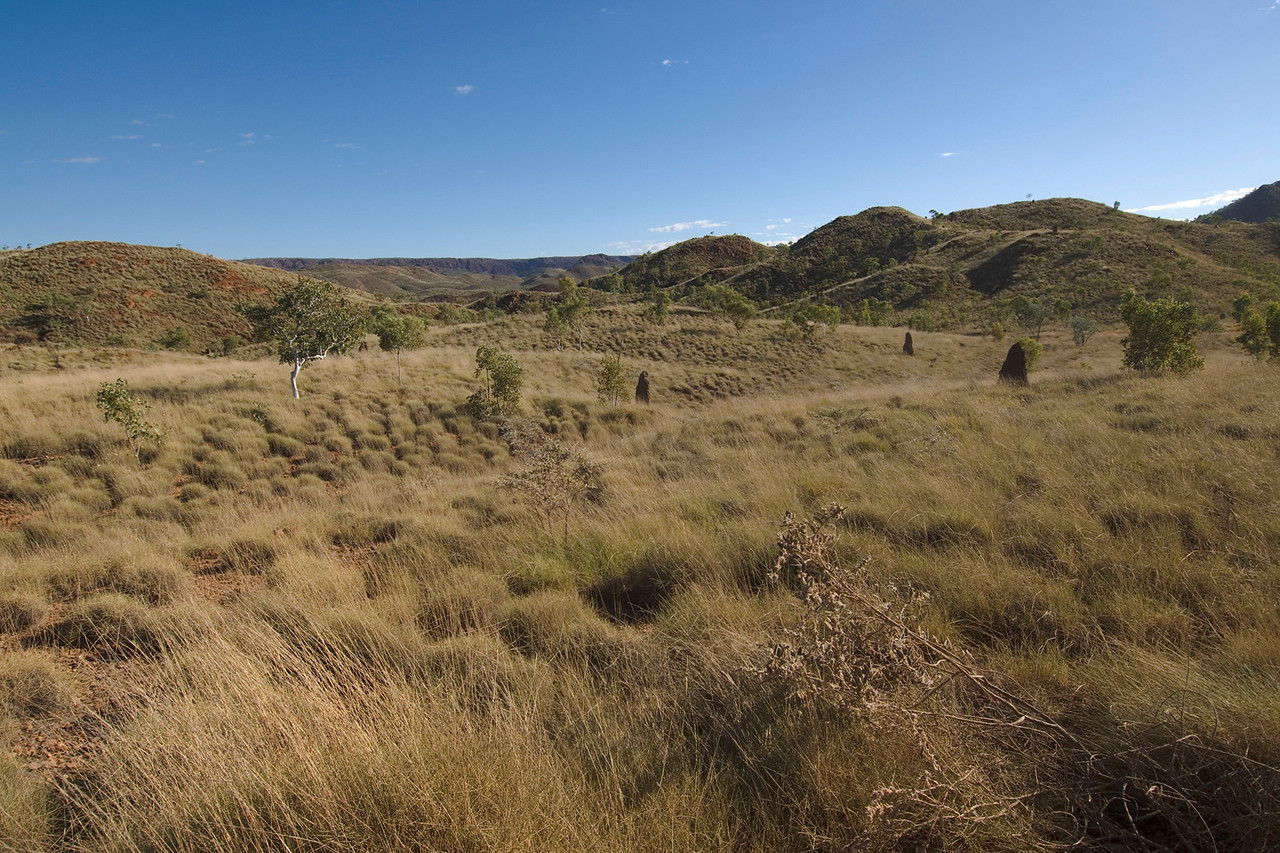 Grass and Hills - Kimberly Region, Western Australia