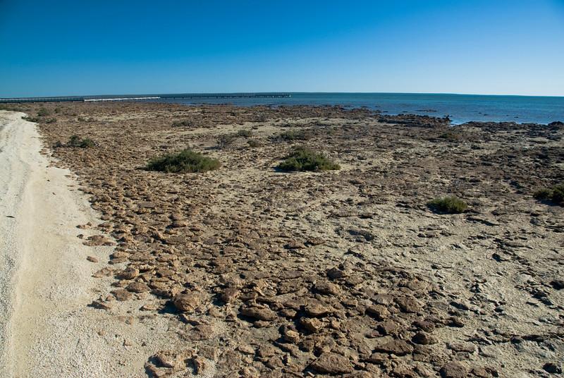 Stromatolites 1, Hamelin Pool - Shark Bay, Western Australia