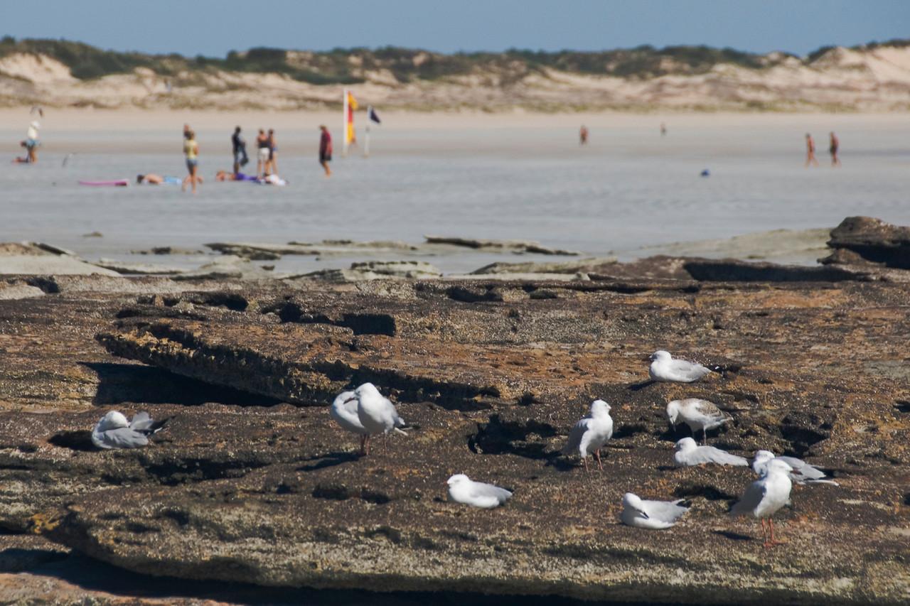 Birds on Beach, Cable Beach - Broome, Western Australia