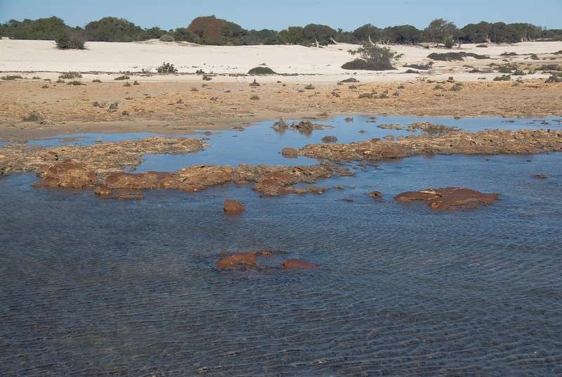 Stromatolite 3, Hamelin Pool - Shark Bay, Western Australia