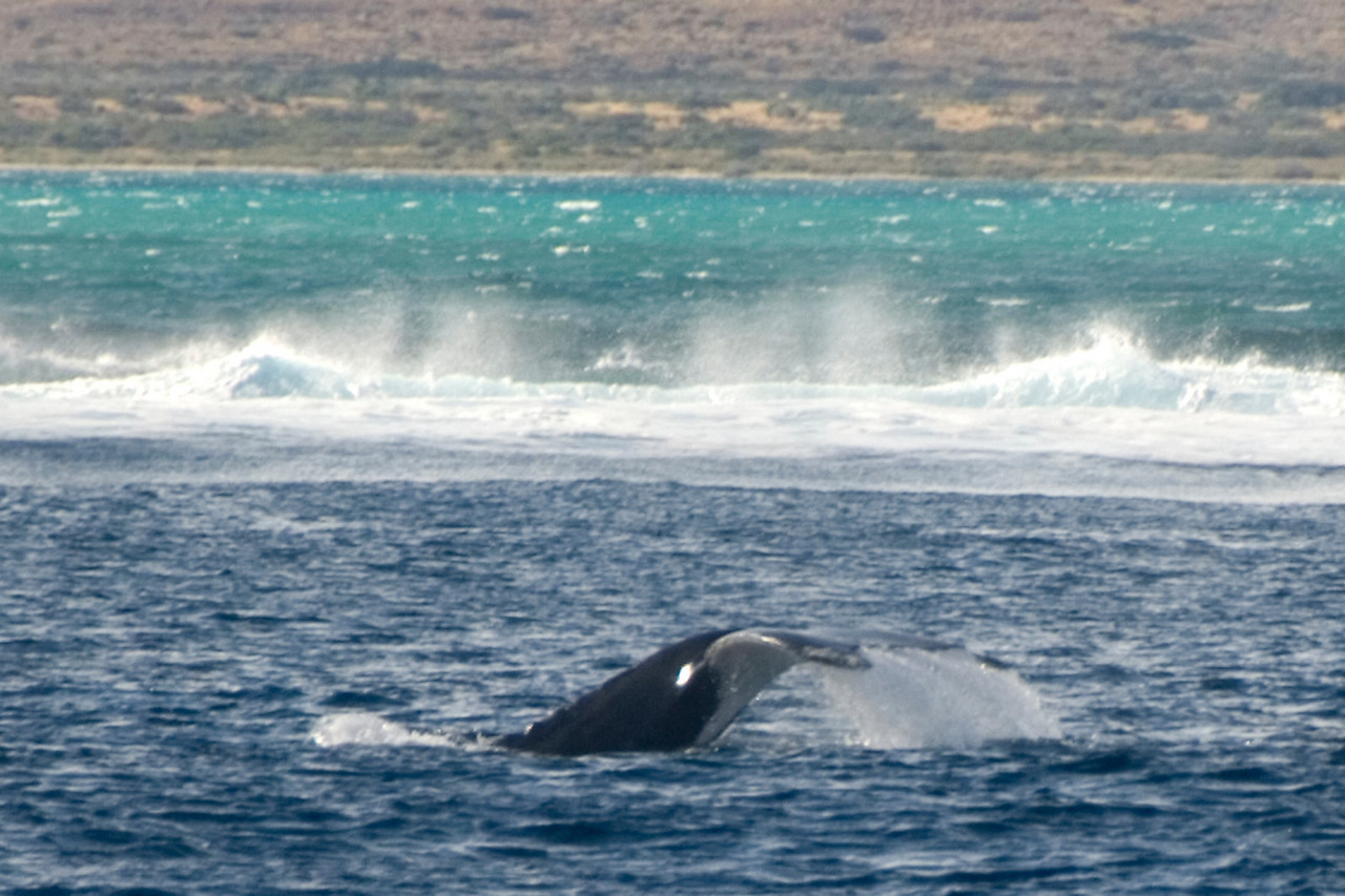 Whale Tail 3 - Exmouth, Western Australia