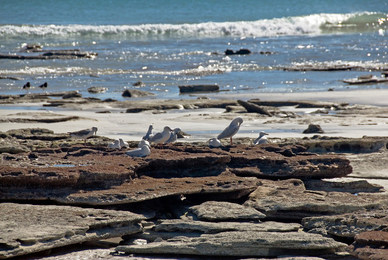 Birds on Beach 2, Cable Beach - Broome, Western Australia