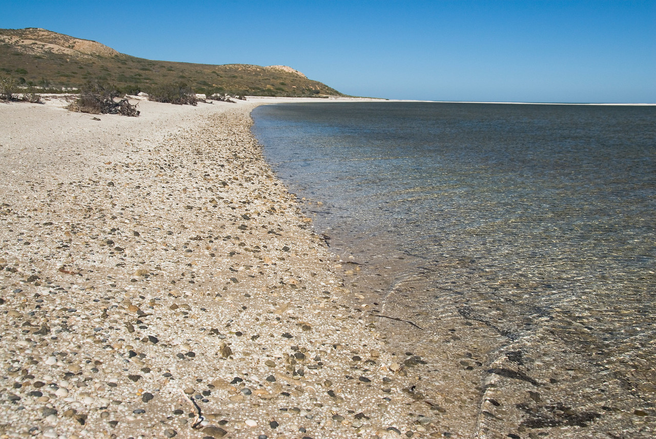 Seashore 2 - Shark Bay, Western Australia