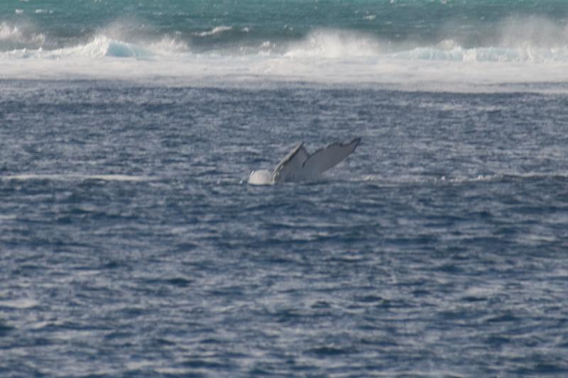Whale Tail 5 - Exmouth, Western Australia
