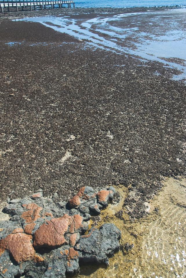 Stromatolite 14, Hamelin Pool - Shark Bay, Western Australia