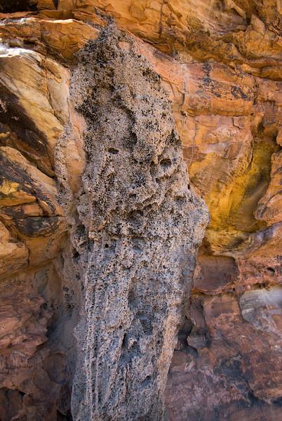 Termite Mound Close Up, Purnululu National Park - Western Australia