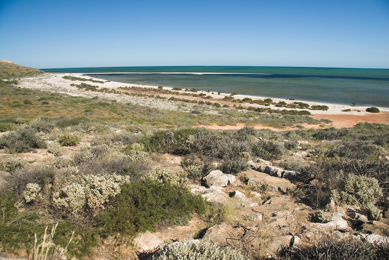 Seashore - Shark Bay, Western Australia
