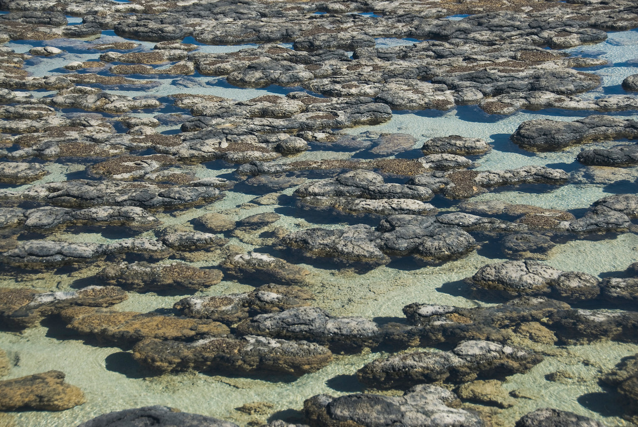 Stromatolite 19, Hamelin Pool - Shark Bay, Western Australia
