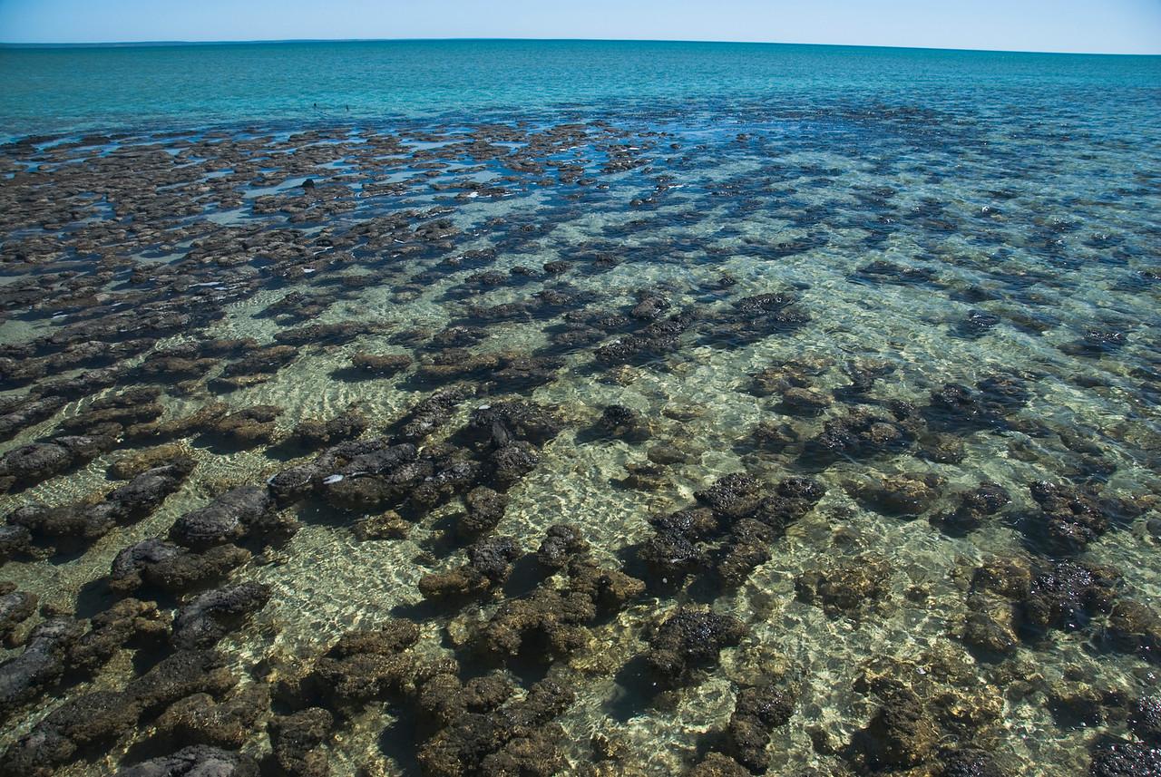 Stromatolite 21, Hamelin Pool - Shark Bay, Western Australia