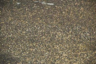 Stromatolite 24, Hamelin Pool - Shark Bay, Western Australia