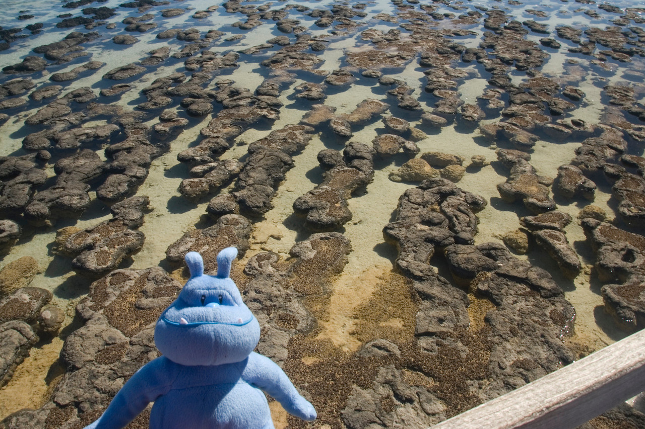 Skull at Stromatolite Pools 2 - Western Australia