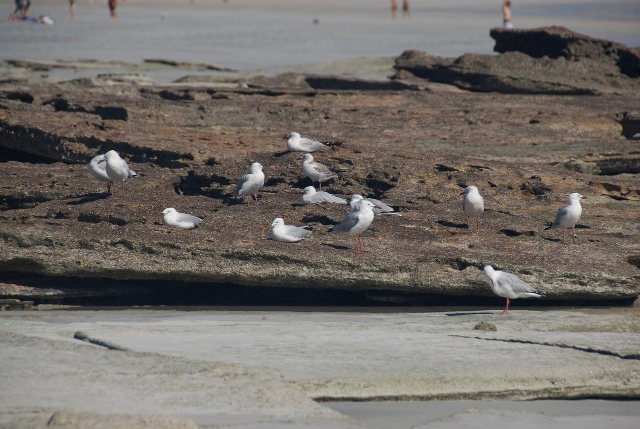 Birds on Beach 3, Cable Beach - Broome, Western Australia