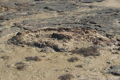 Stromatolite 10, Hamelin Pool - Shark Bay, Western Australia