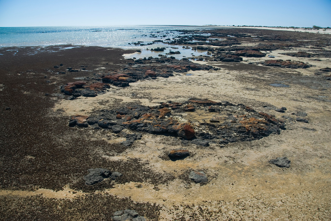 Stromatolite 15, Hamelin Pool - Shark Bay, Western Australia