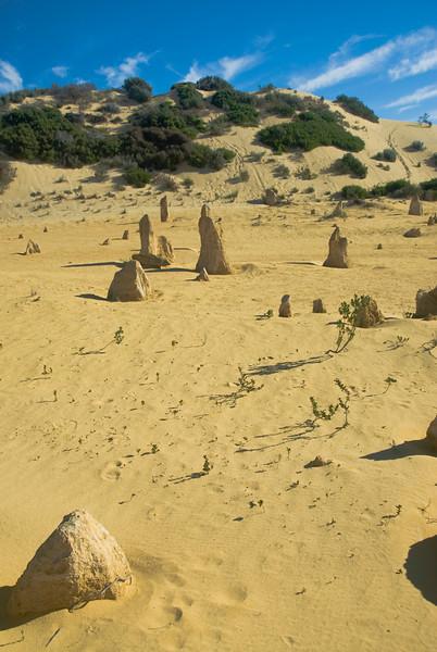 Pinnacle Desert 18 - Western Australia