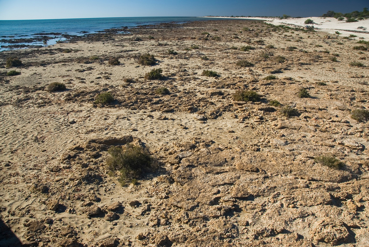 Stromatolite 5, Hamelin Pool - Shark Bay, Western Australia