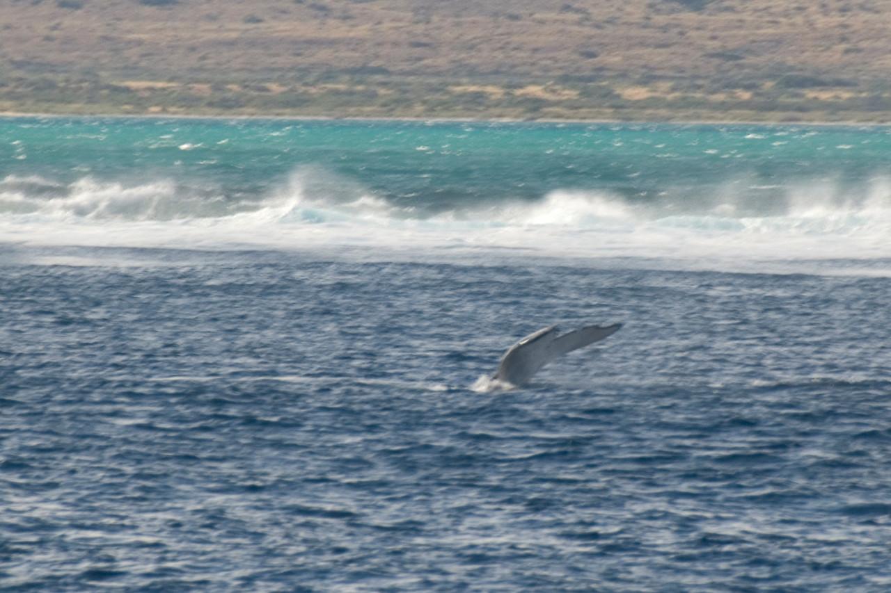 Whale Tail 4 - Exmouth, Western Australia