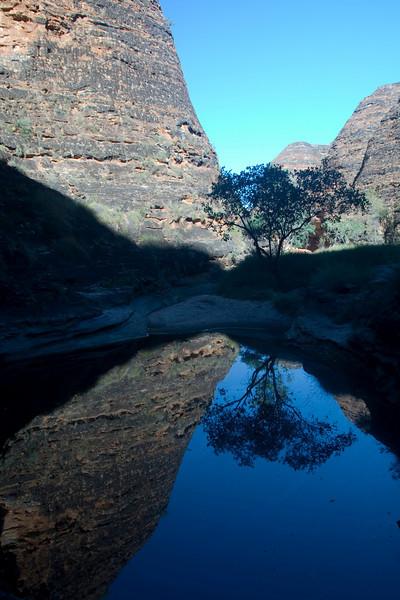 Reflected-Tree-Purnululu-National-Park-Western-Australia