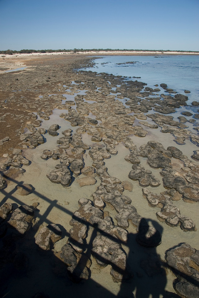 Self Portriate, Stromatolite Pool - Shark Bay, Western Australia