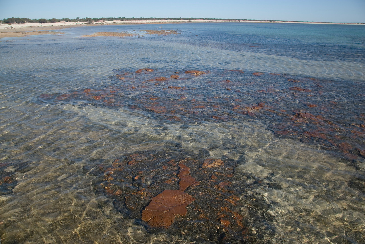 Stromatolite 2, Hamelin Pool - Shark Bay, Western Australia