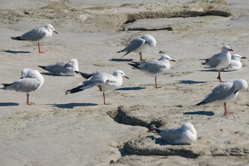 Birds on Beach 4, Cable Beach - Broome, Western Australia