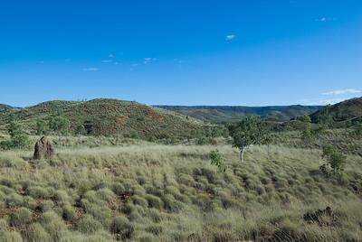 Grass and Termite mounds - Kimberly Region, Western Australia