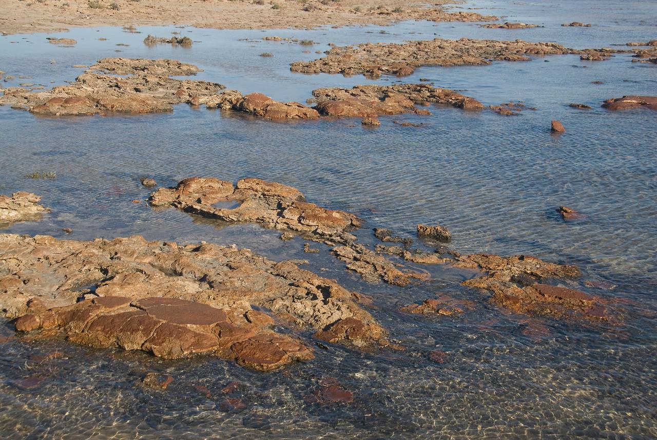Stromatolite 9, Hamelin Pool - Shark Bay, Western Australia