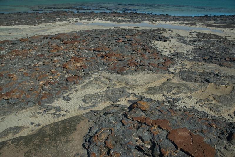 Stromatolite 17, Hamelin Pool - Shark Bay, Western Australia