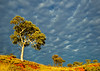Image Title: Karijini National Park 2.  Image No. kee9068b