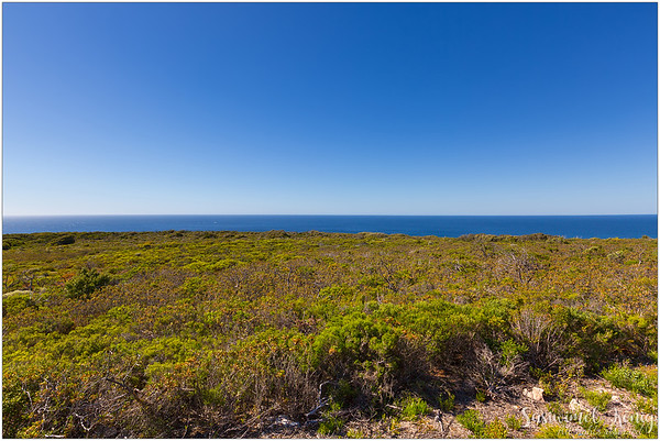Coastal vegetation, Cape Naturaliste